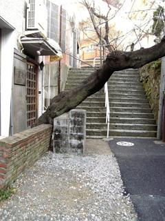 六本木 裏道.jpg